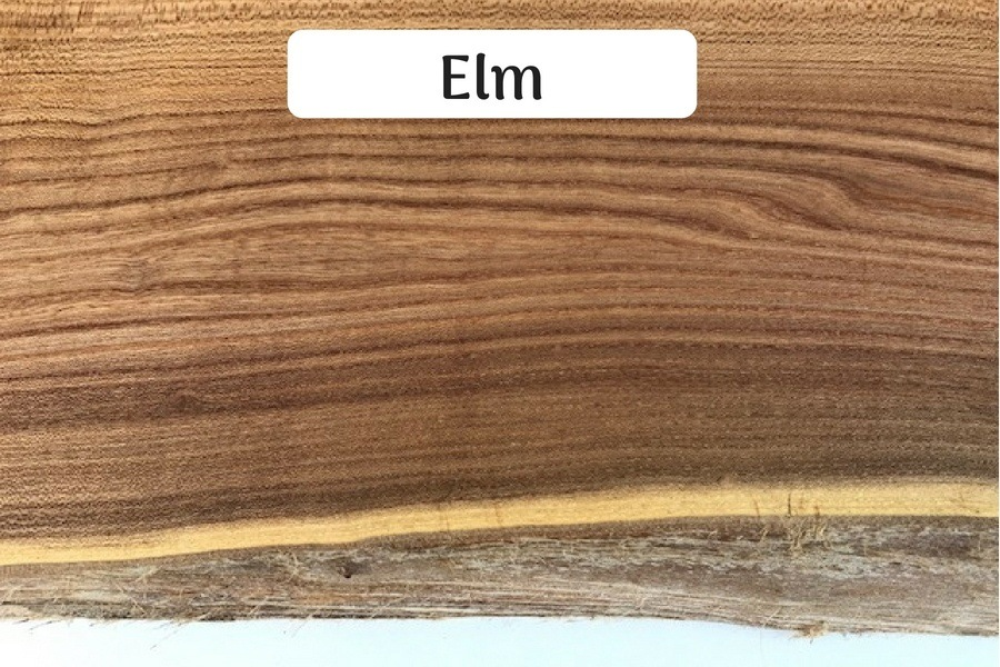 Large Elm Slabs